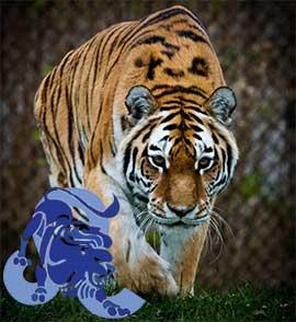 Лев-Тигр характеристика