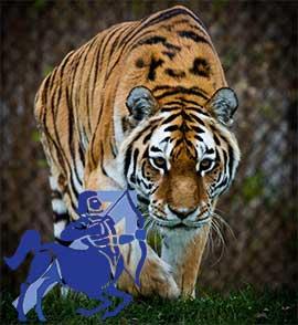 Стрелец-Тигр характеристика