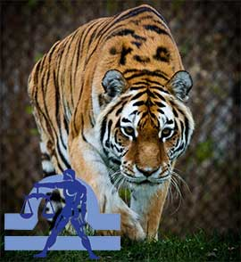 Весы-Тигр характеристика