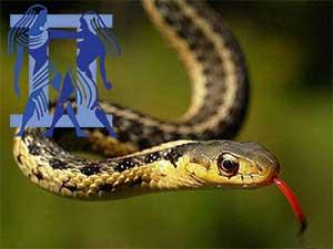 Близнецы-Змея характеристика