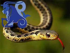 Козерог-Змея характеристика