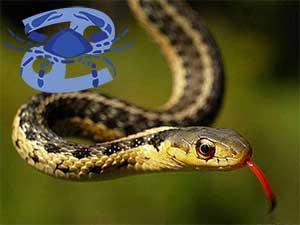 Рак-Змея характеристика