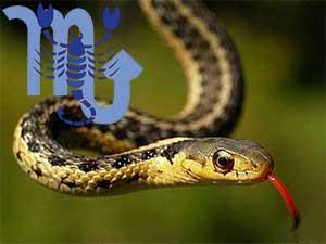 Скорпион-Змея характеристика