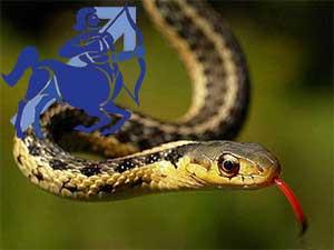 Стрелец-Змея характеристика