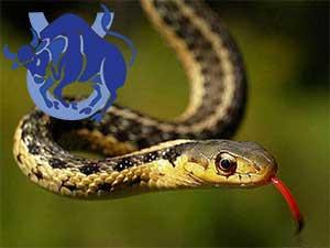 Телец-Змея характеристика