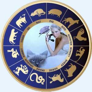 Женщина-Кот (Кролик) - совместимость